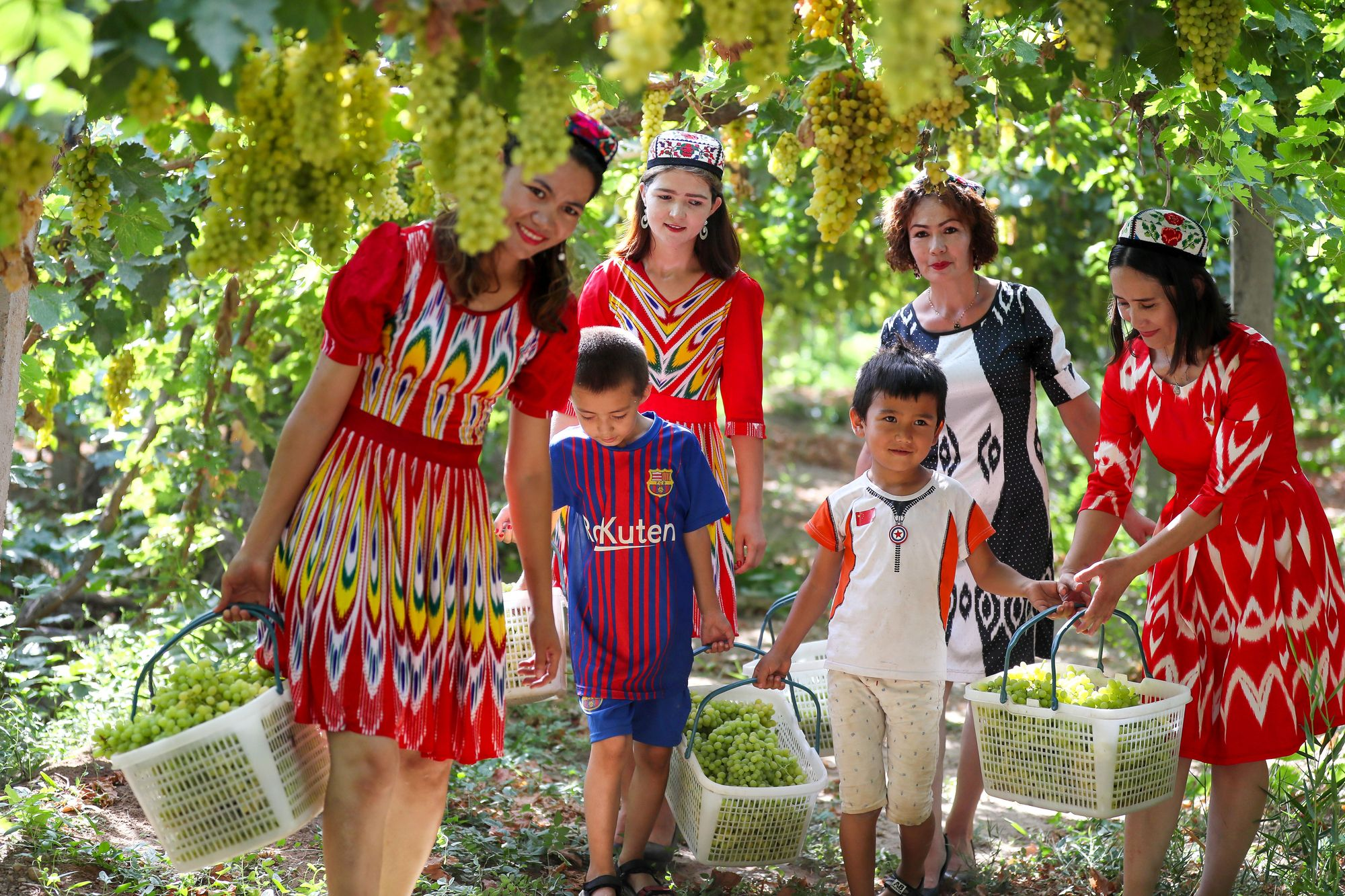 Uyghur Family Harvesting Grapes