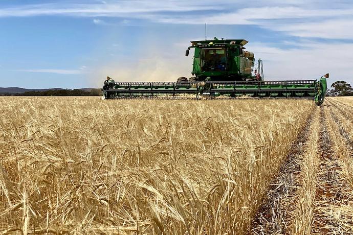 Grain Collector