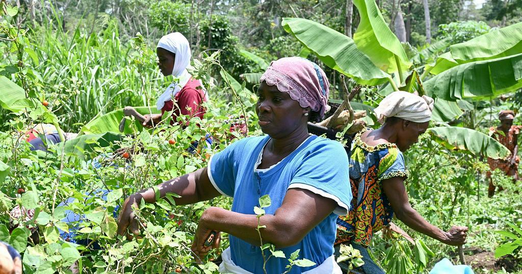 Female Farmers Turning Organic In Ivory Coast
