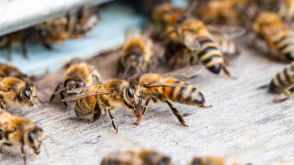Ukraine Beekeeping