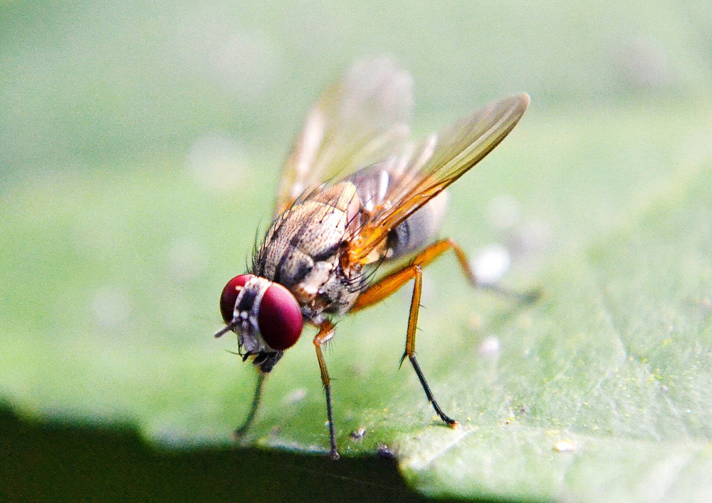 How Flies, And Maybe People, Choose Their Food