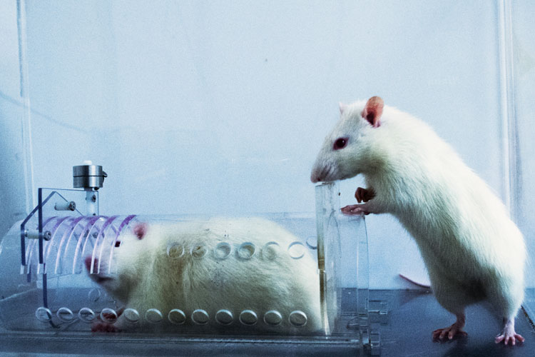 Rats Prefer To Help Their Own Kind; Humans May Be Similarly Wired