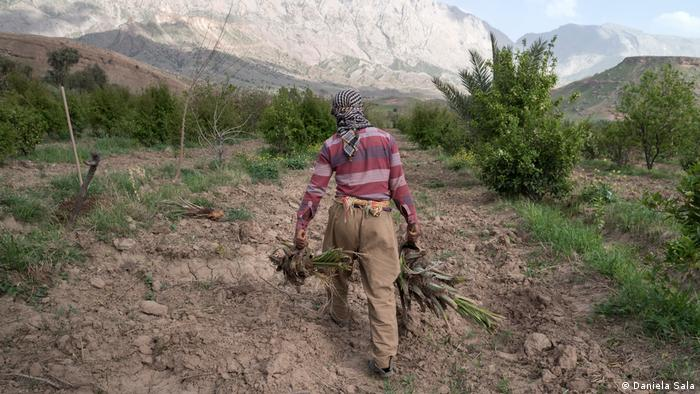 Agriculture suffers from drought in the Kurdistan Region of Iraq