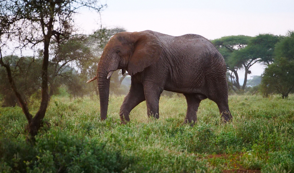 Kenya Praises Fight Against Poaching After Animal Census Shows Improvement