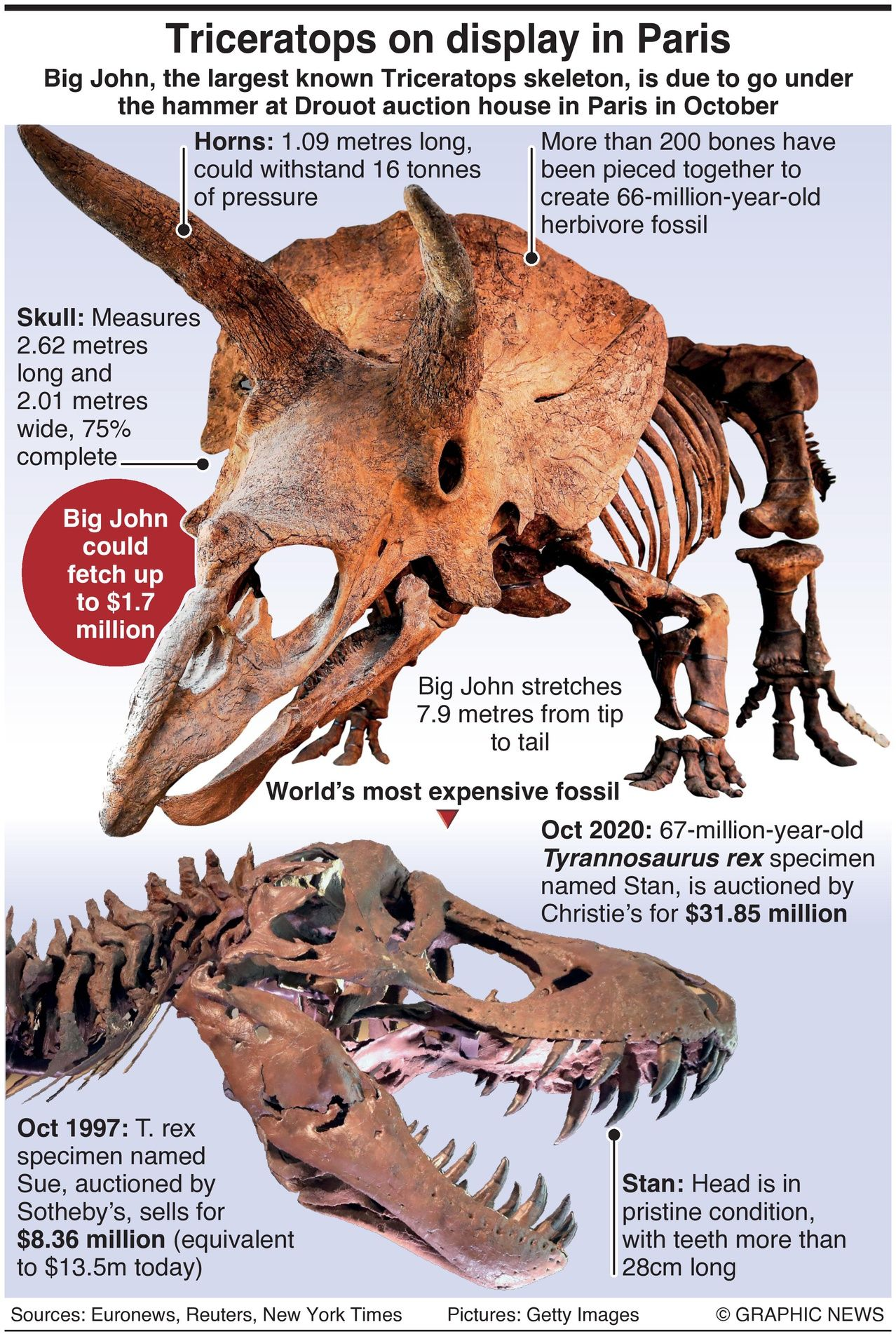 World's Largest Triceratops Goes Under Hammer